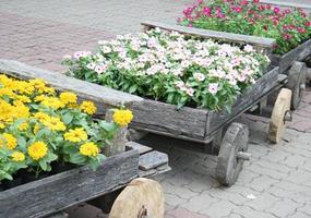 Blumen in Wagen foto