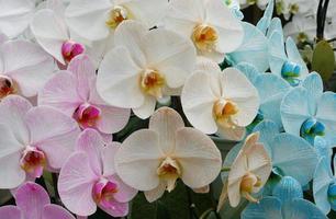 bunte Gruppe von Orchideen foto