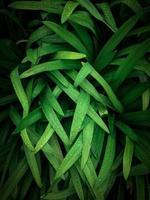 grünes Gras mit Tau foto