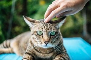 Hand streichelt eine getigerte Katze