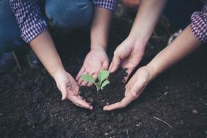 Bauern, die Bäume in den Boden pflanzen foto