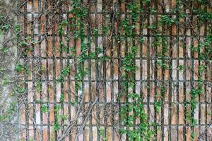 grüne Kriechpflanze, die auf einer Mauer wächst foto