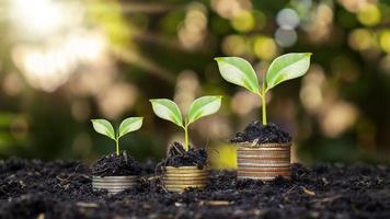 Münzen und Pflanzen werden auf einem Stapel Münzen für Finanzen und Bankwesen angebaut. die Idee, Geld zu sparen und die Finanzen zu erhöhen foto