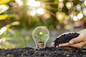 Am Tag der Erde wächst ein Baum in Glühbirnen, Energiespar- und Umweltkonzepten foto