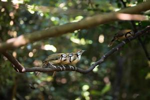 drei Vögel auf einem Baum