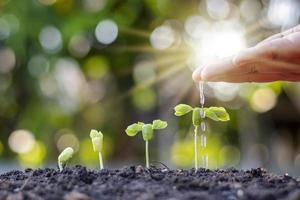 wachsende Vegetation auf dem fruchtbaren Boden, einschließlich der Sonne, die durch die Hände der gießenden Bauern scheint foto