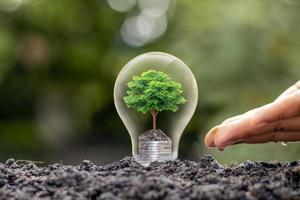 der Baum, der auf einem Haufen Geld in einer Glühbirne mit einem grünen Naturunschärfehintergrund wächst. Energiesparkonzept foto