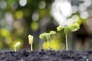 kleine Bäume unterschiedlicher Größe auf grünem Hintergrund, das Konzept der Umweltverantwortung und des Weltumwelttags foto
