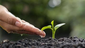Umwelt Tag Konzept, Wassertropfen zur Hand, um Bäume zu pflanzen und die Umwelt zu schützen foto
