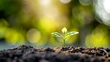 Pflanzensämlinge oder kleine Bäume, die auf fruchtbarem Boden und weichem Sonnenlicht wachsen, einschließlich verschwommener grüner Hintergründe, des Konzepts des Pflanzenwachstums und der Ökosysteme foto