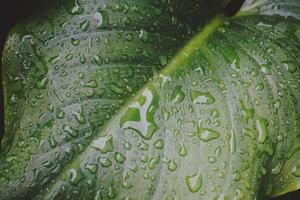 Tropfen auf die grünen Pflanzenblätter foto