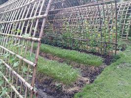 Bambuszaun der Efeu-Baumschule foto