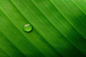 Wassertropfen auf einem Bananenblatt foto