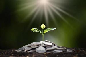 Zu den Setzlingen, die auf dem Münzhaufen wachsen, gehören das weiße Licht, das die Bäume durchflutet, Geschäftsideen, Geld sparen und Wirtschaftswachstum foto