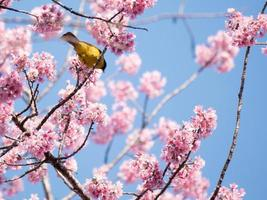 gelber Vogel und rosa Blumen foto