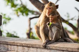 Affen auf einem Zaun foto