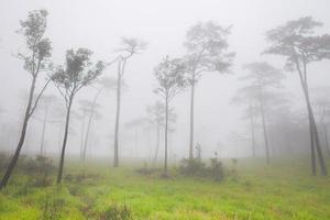 neblige Aussicht auf einen Wald
