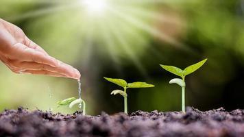 Pflanzen auf fruchtbarem Boden pflanzen und die Pflanzen von Hand gießen, Wiederaufforstung und Bauernideen foto