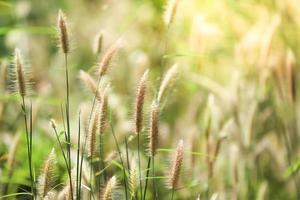 Nahaufnahme von Gras mit unscharfem Hintergrund
