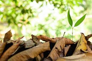 wachsender Baum und trockene Blätter auf natürlichem Hintergrund foto