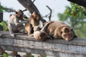 Gruppe von Affen auf einem Zaun foto