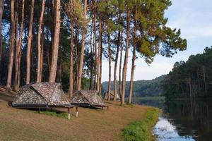 Campingzelte mit Baum in der Nähe von Wasser foto