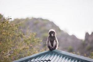 Affe sitzt auf einem Dach foto