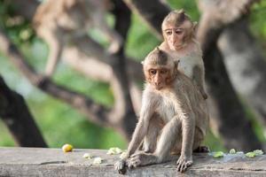 zwei Affen auf einem Zaun foto