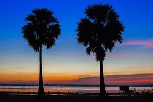 zwei Palmen-Silhouetten foto