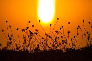 Silhouetten von Pflanzen bei Sonnenuntergang