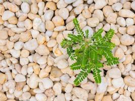 Pflanze wächst in Felsen