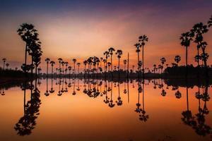 Palmen, die sich bei Sonnenaufgang im Wasser spiegeln foto