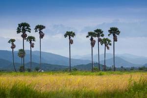 Palmen und Berge