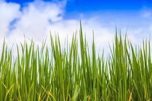 Nahaufnahme von Gras mit einem blauen Himmel