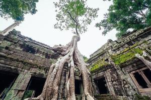 Ta Prohm Tempel mit Bäumen in Angkor, Siem Reap, Kambodscha überwachsen