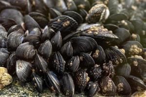 Muscheln stapelten sich auf einem Felsen foto