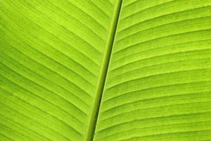 Nahaufnahme des Bananenblattes foto