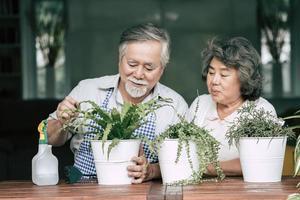 älteres Ehepaar, das zusammen spricht und Bäume in Töpfe pflanzt foto