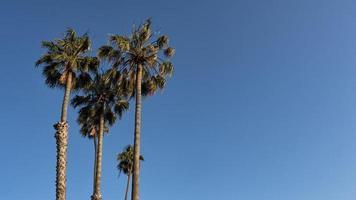 Palmen bei Sonnenuntergang