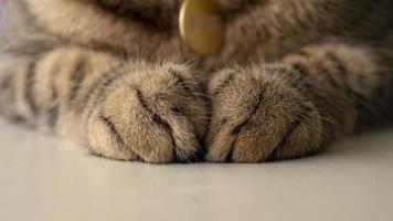 Nahaufnahme von Tabby-Katzenpfoten foto