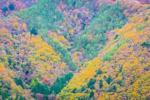 Wald auf einem Berg im Herbst foto