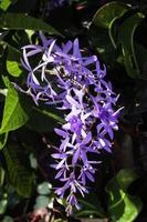 lila Blumen im Garten