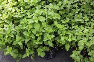 hängende Körbe mit blühenden grünen Pflanzen