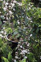 grüne Gartenpflanzen