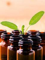 ätherisches Öl und grüne Blätter foto
