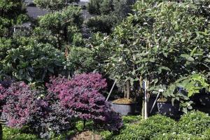 schöne üppige Gärten