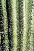 Nahaufnahme einer Kaktuspflanze foto
