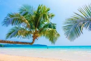 tropischer Strand mit Palmen foto