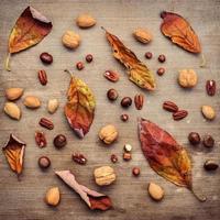 getrocknete Blätter und Nüsse foto