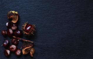 frische Conkers aus ihrer Kapsel von einem Rosskastanienbaum auf Schieferhintergrund für Menüs, Etiketten oder Zeichen